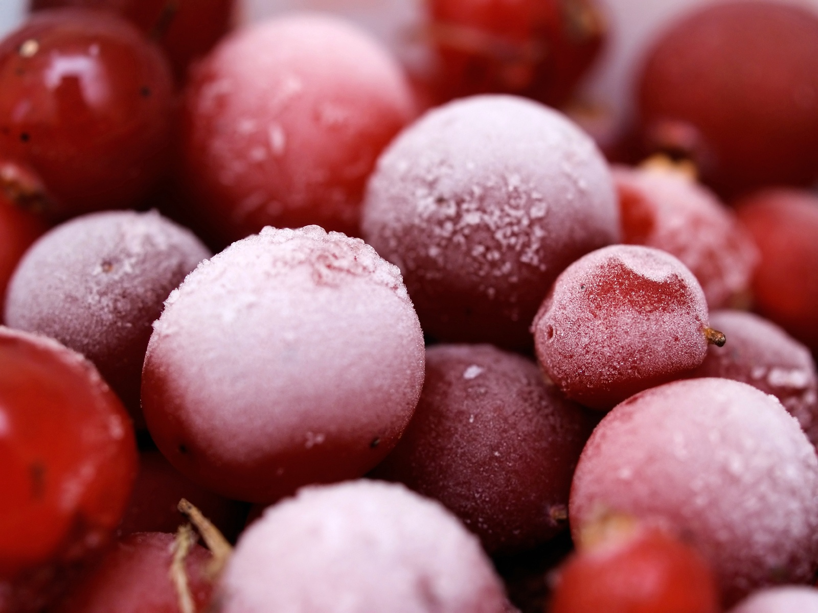 Frosted Cranberries.jpg